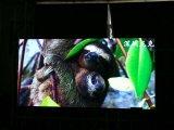 Écrans de publicité d'intérieur de l'Afficheur LED DEL