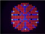 As plantas Vermelho-Azuis do diodo emissor de luz crescem a lâmpada