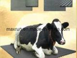 De RubberMat van het Comfort van de koe, Hoogstaand van de Mat van de Rust van het Vee het Rubber en 5 Jaar van de Garantie
