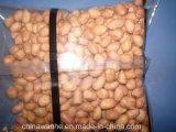 Sjiii KW500 haute capacité de machine d'emballage de pesage à fonctionnement automatique de grain