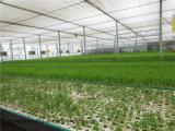 Sistema idroponico di vendita calda crescente per la verdura