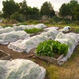 Prodotto non intessuto UV di resistenza per agricoltura