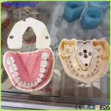 Dental Software Gum Removable 28PCS Teeth Model Nissin 200 Compatible Hesperus
