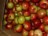 Neues Getreide rotes Jiguan Apple mit Karton-Verpackung