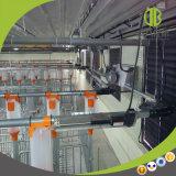Système alimentant automatique à chaînes de porc/système alimentant sec