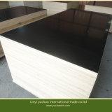 1220 * 2440mm Modèle de construction de haute qualité à bas prix