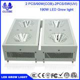 El LED usado crece el espectro completo ligero, MAZORCA LED del hidrocultivo 120W del invernadero crece la luz