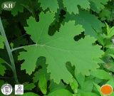 Estratto superiore Sanguinarine di Cordata del Macleaya per l'additivo dell'alimentazione