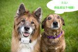 Nouveau dispositif de localisation en mode Veille Chien GPS Tracker pour chiens