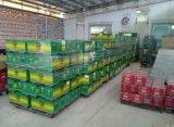 Die meiste zuverlässige 12V 190ah Hochleistungssaure JIS Autobatterie der automobil-/LKW-Batterieleitungs-