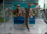 Boîte de présentation acrylique claire de luxe de reptile