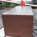 Madera contrachapada impermeable de la cara de la película de Brown de la base del álamo para la construcción (6X1250X2500m m)