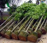 Eco-Friendly 도매 검정 펠트 직물 정원 루트 통제 플랜트 섬유 부대