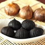 منتوجات نباتيّ ثوم أسود [فرمنتتد]