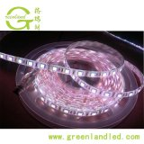 Ce RoHS 12V 24V 60LED 5050 Strip Light LED RVB