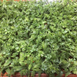 40x60cm Jardín Vertical de pared verde follaje Artificial para oficinas domésticas Store decoración paisajismo