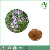 Fabrik-Zubehör-natürliche PflanzenLespedeza Capitata Auszug-Flavonoide 6%