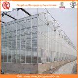 Landbouw Multi Span PC Sheet Serres voor Planting