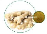 Soulager la bronchite Toux Extrait naturel de racine de gingembre Gingerols en poudre 5% à 20%