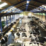 De Geprefabriceerde die Koe van het Staal van de Woningbouw van de landbouw Vervaardiging met Lage Kosten wordt afgeworpen