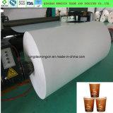 PET überzogenes Papier für Kaffee-oder Tee-Cup