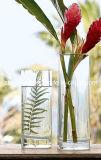 Piccolo vaso di vetro (SG-CV100715)