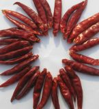 Le chili de Arbol séchés Sin Cavo