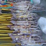 Gefrorene Meerestier-North- Pacifickalmar-Aufsteckspindel