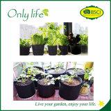 Onlylife wächst am meisten benutztes Filz-Gemüse Beutel kein Griff