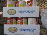 Cultura fresca de excelente qualidade para conservas de feijão cozido em molho de tomate