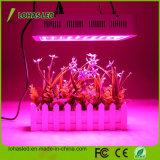 가득 차있는 스펙트럼 고성능 300W 450W 600W 800W 900W 1000W 1200W 2000W 수경법 LED는 온실 식물을%s 가볍게 증가한다