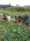 Acondicionador del suelo de Unigrow para cualquie establecimiento vegetal