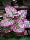 Piante di alta qualità e fiori artificiali Bush di Gu-Jy-205813