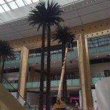 Piante e fiori artificiali della palma Gu543500336236134470023jk0 dei Cochi