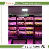 LEDが付いているプラント工場を育てるKeisueのHydroponicプラントはライトを育てる