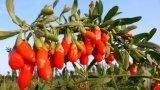 Китайские высушенные ягоды Goji, органическое Wolfberry, здоровая еда, сухие плодоовощи