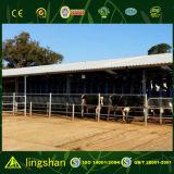 Cultivando a fabricação de aço do baixo custo de edifício de casa pré-fabricou a vertente da vaca