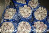 순수한 부대를 가진 2017 새로운 작물 일반적인 백색 마늘