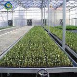 Multi Span гидропонное огородничество парниковых выбросов парниковых газов лист ПК