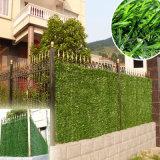 La plastica protegge la barriera artificiale del Boxwood della rete fissa del foglio dell'EDERA