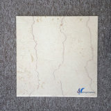 Amarillento natural Polished Mable del shell