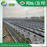 Multi-Span agricoles de bonne qualité avec un fort effet de serre de la structure de verre