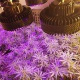 Espectro 1000-4000W LED de luz para crecer el médico/hierbas y plantas de invernadero de alto rendimiento