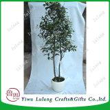 Simulación artificial de alta mayorista chino Olmos bonsáis, plantas ornamentales, árboles