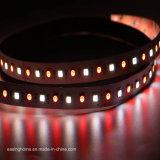 120PCS/M/LED l'illuminazione decorativa flessibile il LED 5 della striscia 5050SMD Chip/12VDC/24VDC scheggia cinque colori in 1 striscia del LED