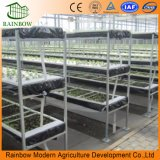 Greenhouse Tomato PlantingのためのHydroponics