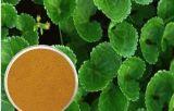 Extracto asiatica con los triterpenos, Asiaticoside de Centella para el alimento y los cosméticos