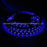 Striscia blu del chip 60LEDs 14.4W DC12V LED di colore IP65 SMD5050