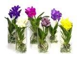 Ясная акриловая ваза индикации цветка Vanda