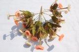 Fiori di seta poco costosi di falsificazione della margherita dei fiori artificiali per la decorazione domestica di cerimonia nuziale